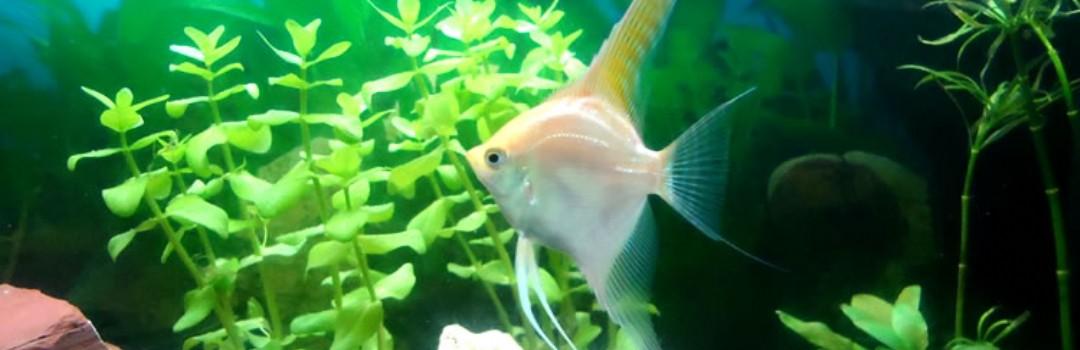 Vissenwereld   AVONTURIA   De grootste dierenwinkel van Nederland