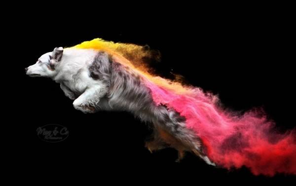 Holi-Powder Fotoshoot tijdens Dogpop